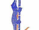 logo-hermes-staff-color2-465x600